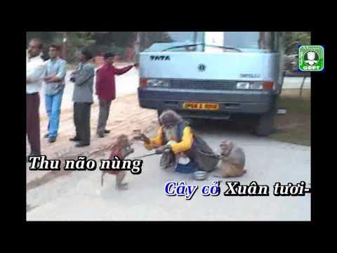 Cư Trần Lạc Đạo - Bảo Yến - Việt Anh
