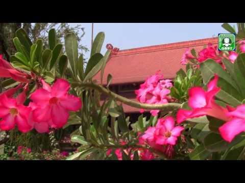 Xuân lễ Phật  Karaoke -