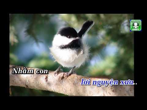 Lòng hiếu chim Oanh Vũ  Karaoke -