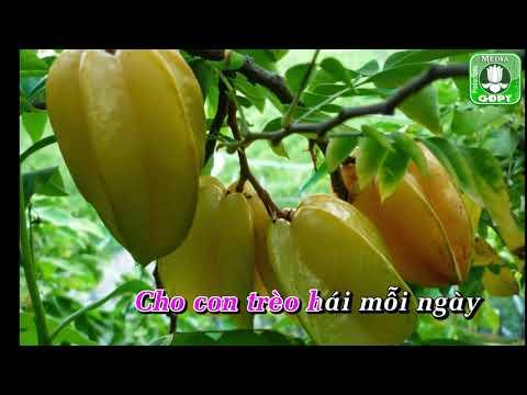 Quê hương [Karaoke] -