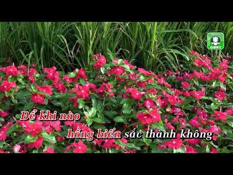 Sắc hoa [Karaoke] - Nguyễn Duyên Quỳnh
