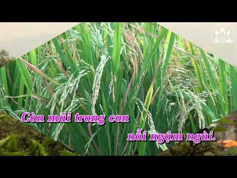 Còn nỗi ngậm ngùi - Nguyễn Duyên Quỳnh