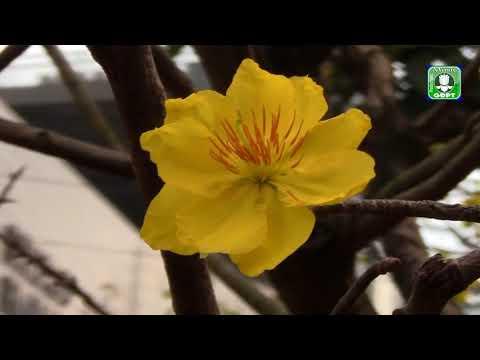 Xuân ly hương - Quốc Nghĩa